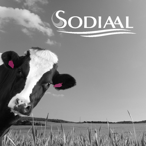 Sodiaal choosed Synertrade